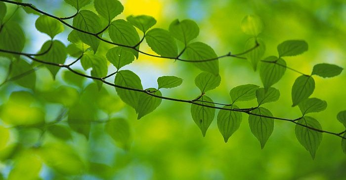 [wallcoo.com]_2560x1600_Widescreen_GreenLeaves_wallpaper_da035097f